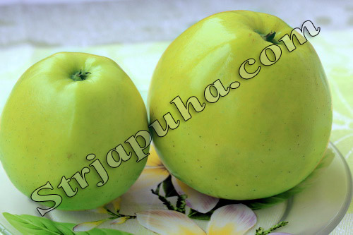 яблоко семеренко